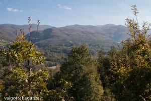 Val Gotra Autunno 2014 (165) foliage