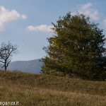 Val Gotra Autunno 2014 (204) foliage
