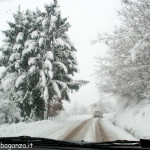 Bedonia Neve Ghiaccio (20)