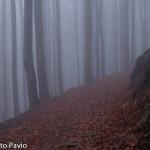Paesaggi nebbia di Roberto Pavio (11)