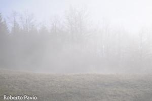 Paesaggi nebbia di Roberto Pavio (14)