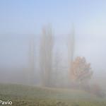 Paesaggi nebbia di Roberto Pavio (16)