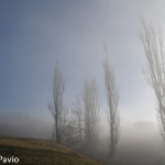 Paesaggi nebbia di Roberto Pavio (20)