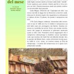 semprevivo dei tetti (1) storia