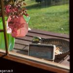 Cinciarella mangiatoia (21) teglia