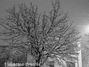 Parma neve (13) bianco nero 2015