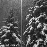 Parma neve (16) bianco nero 2015