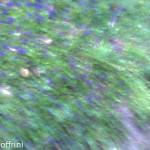 Violette di Parma elaborate