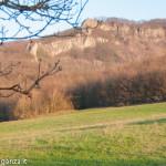 Capriolo Prato delle Volpi Berceto (100)