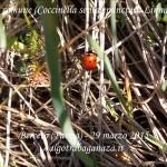 Coccinella nell'erba (104) da video
