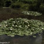 Borgotaro natura (120)