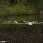 Borgotaro natura (149)
