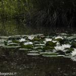 Borgotaro natura (181)