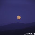 Luna Blu (10) natura