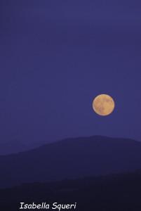 Luna Blu (11) natura