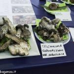 Mostra (134) micologica