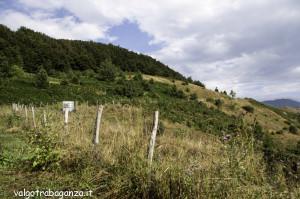 Val di Vara (103) Cento Croci