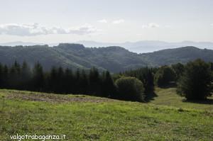 Capriolo (113) Calestano