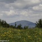 Monte Pelpi (107)