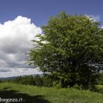 Monte Pelpi (109)