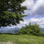 Monte Pelpi (231)