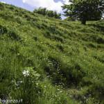 Monte Pelpi (244) narcisi