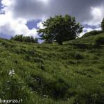 Monte Pelpi (245) narcisi