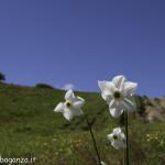 Monte Pelpi (265) narciso
