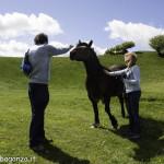Monte Pelpi (340) cavalli