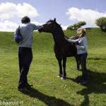 Monte Pelpi (341) cavalli