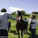 Monte Pelpi (342) cavalli