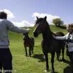 Monte Pelpi (343) cavalli