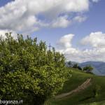 Monte Pelpi (440)