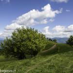 Monte Pelpi (441)