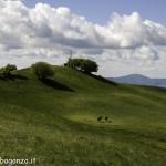 Monte Pelpi (468)
