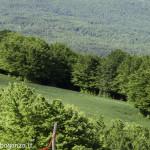 Monte Pelpi (471)
