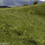 Monte Pelpi (475)