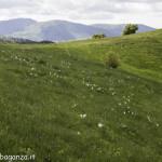 Monte Pelpi (477)