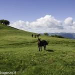 Monte Pelpi (478)