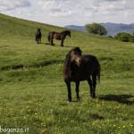 Monte Pelpi (479)