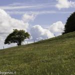 Monte Pelpi (522)
