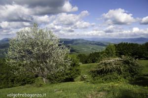Monte Pelpi (535)