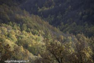 foliage (102) Boschetto