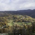 foliage (119) Boschetto