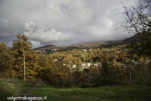 foliage (122) Boschetto