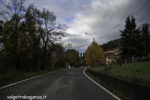 foliage (146) Boschetto