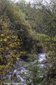 Diga Montegroppo (101) foliage