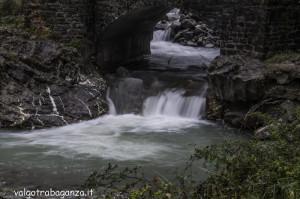 Diga Montegroppo (111) foliage
