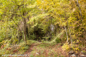 Foliage (100) cascate