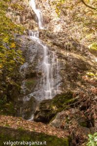 Foliage (113) cascate